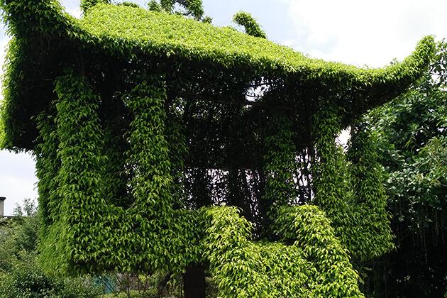 Làng cây Vị Khê ở Nam Định