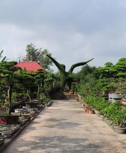 làng cây cảnh Vị Khê