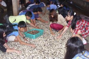 trải nghiệm đánh bắt sò ở Nam Đinh